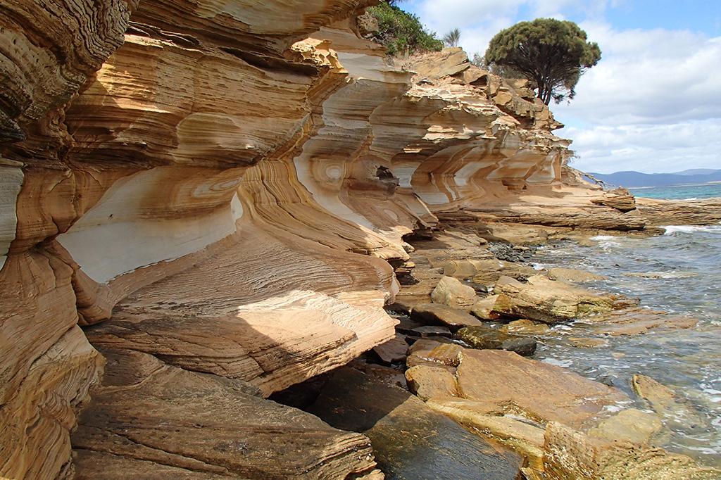 Maria Island Tasmania Tours